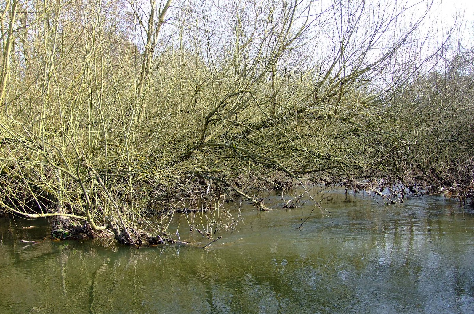 Canoeing and Kayaking on The River Kennet: Strainers on ...