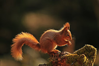 Squirrels dream meaning