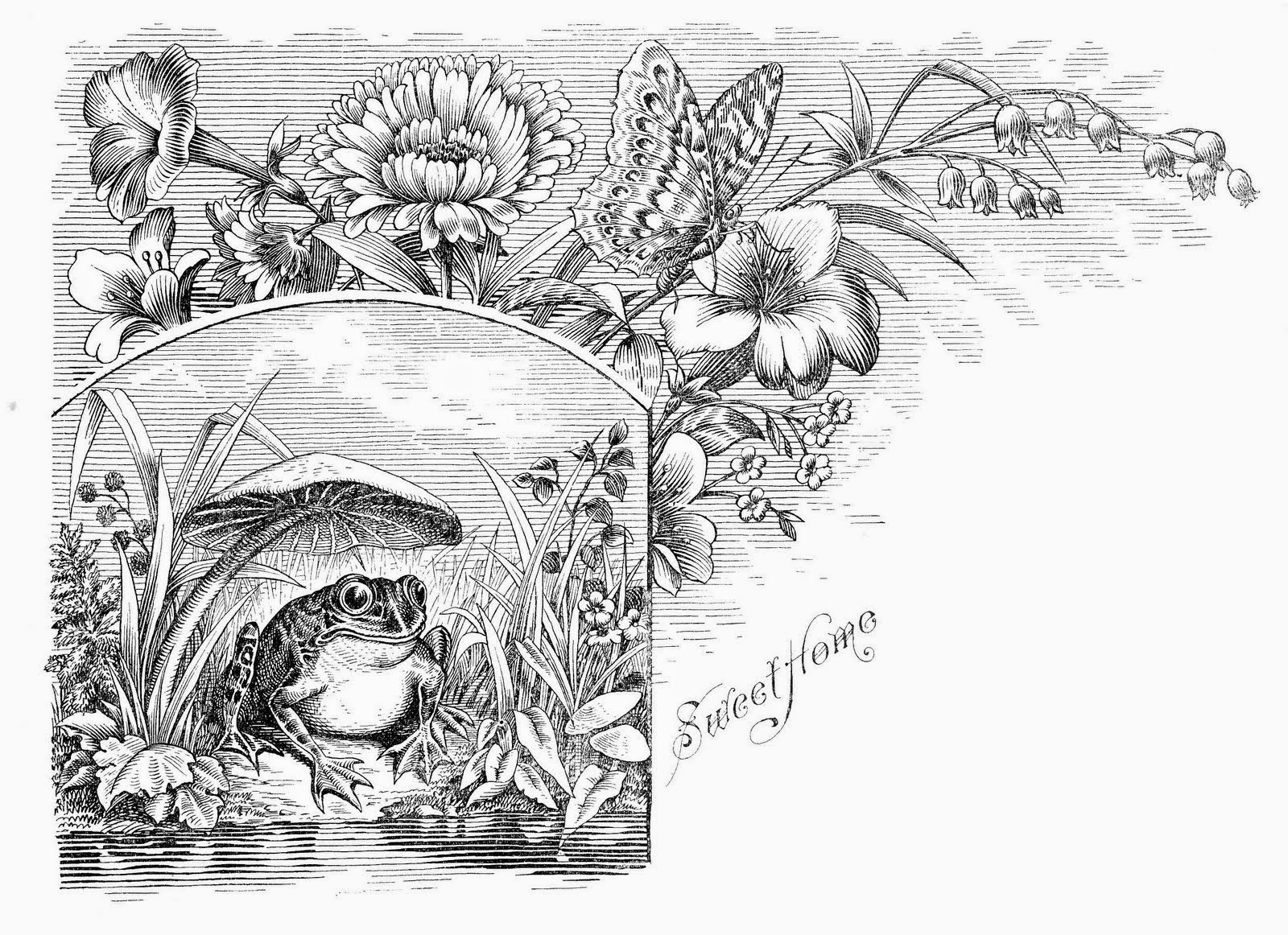 toad coloring pages to print - photo#36