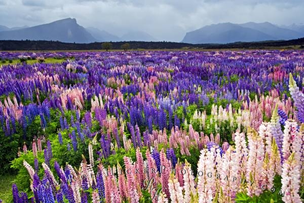 Resultado de imagem para imagens de campos floridos
