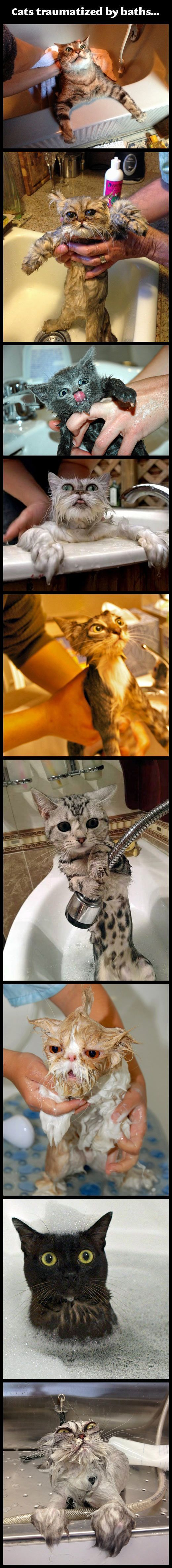 Cats traumatized by baths funny picture