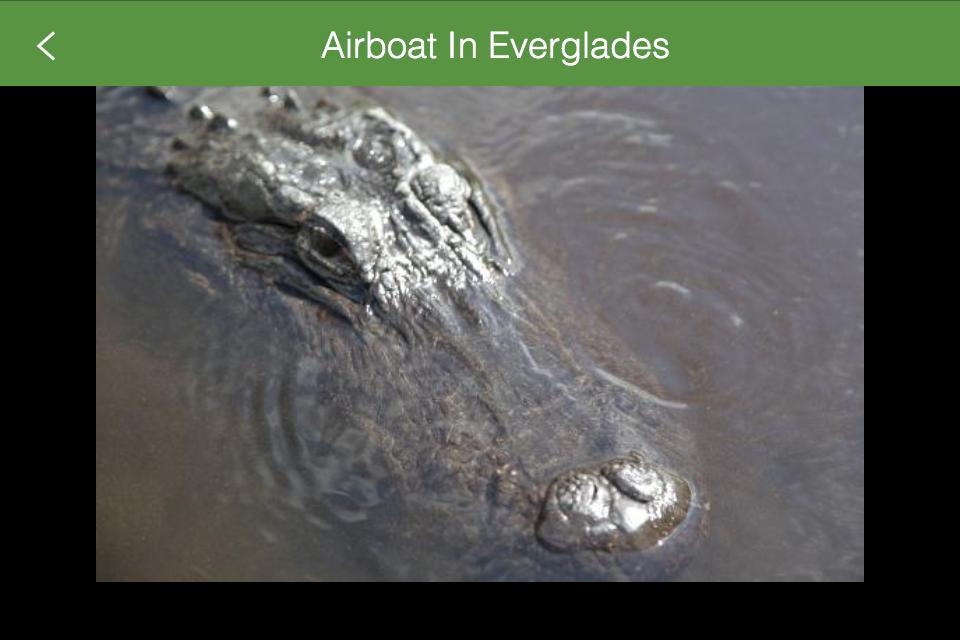 miami airboat tours
