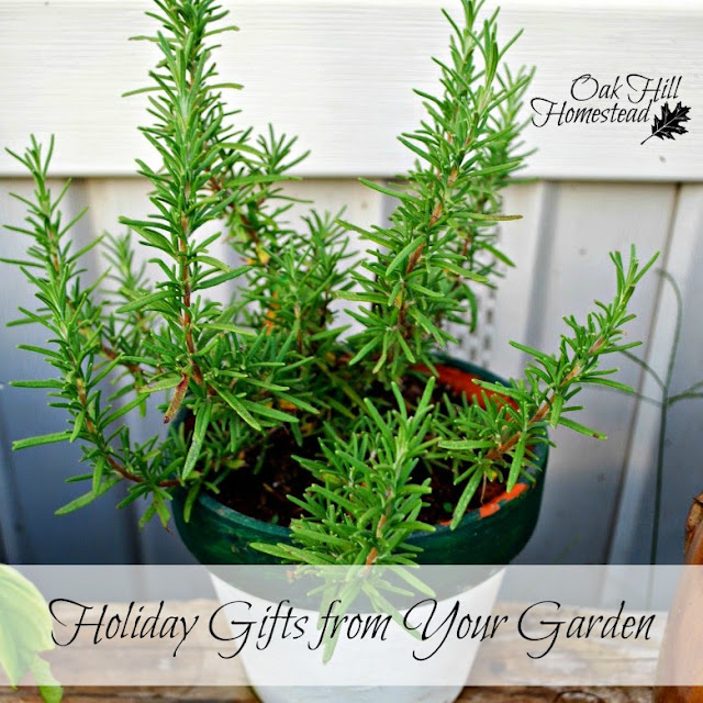 Plan now to make holiday gifts for your family and friends from your garden and homestead.