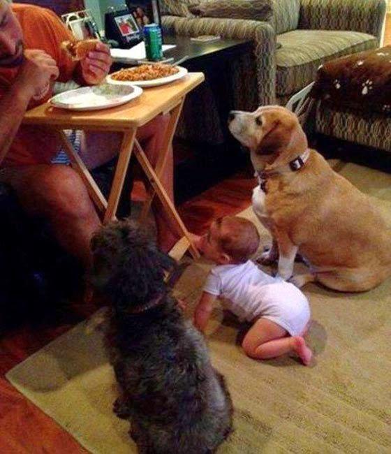 Funny Begging Dog Baby joke picture