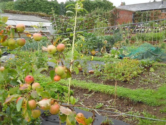 kitchen garden, ogród warzywny
