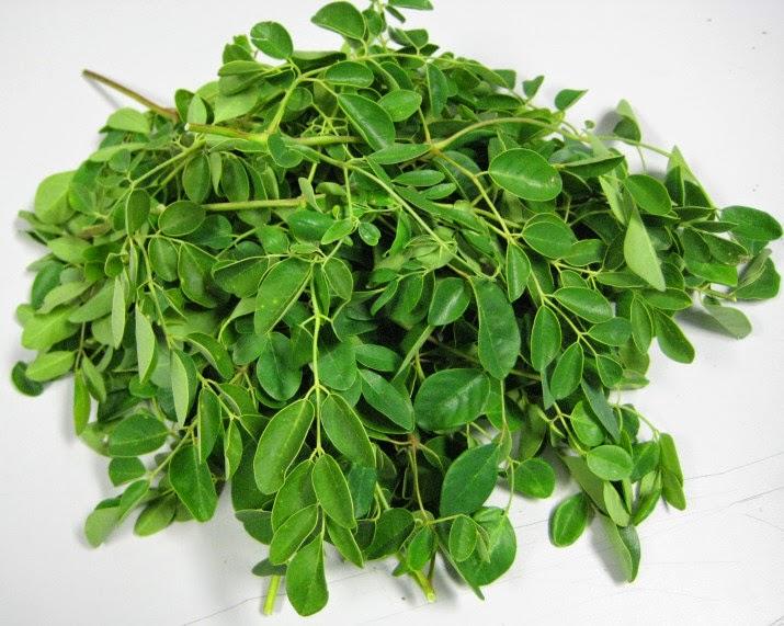 มะรุม สรรพคุณทางยาประโยชน์และผลข้างเคียงจากงานวิจัยม.มหิดล ~ Siam Herbs