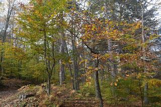 Άρθρο του Χάρη Τζαμακλή για τους Δασικούς χάρτες