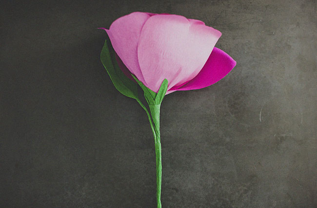 passo a passo Rosa Gigante de Papel Crepom