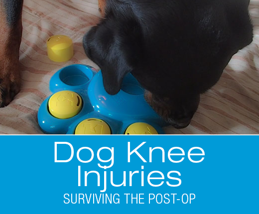 Surviving the post op after your dogs aclccl surgery dawg knee injuriespostop2g solutioingenieria