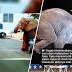 (Video) Hilang nyawa selepas 86 das tembakan, kisah penderitaan gajah betina ini buat netizen menangis