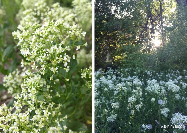 Flower fields in bloom // www.thejoyblog.net