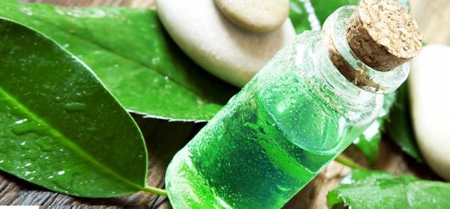 28 Efek Samping Minyak Pohon Teh untuk Kesehatan