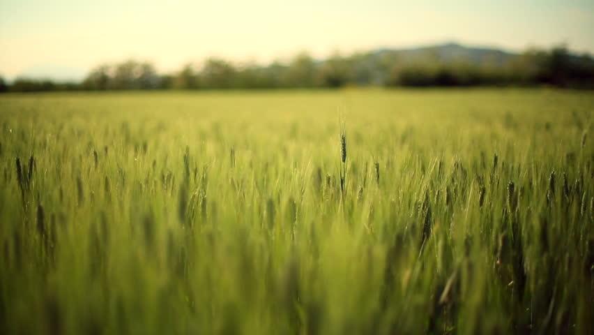 Tại sao nông nghiệp lại quan trọng trong thế giới ngày nay ? - bài tiểu luận tiếng anh