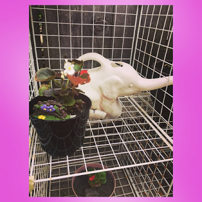 white elephant watering can and begonia in container with fairy garden bridge decor