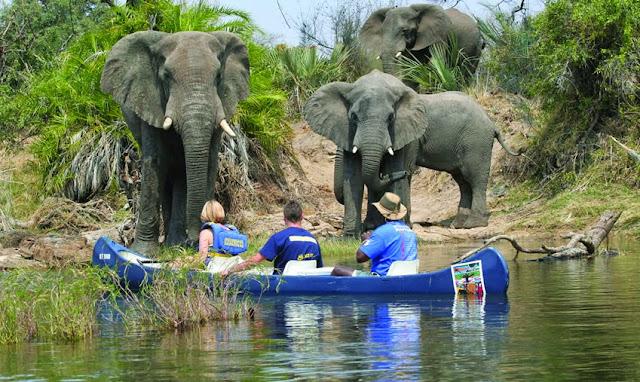 Canoeing Zambezi Safari