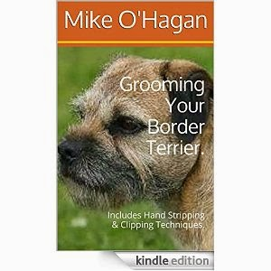 Grooming Your Border Terrier