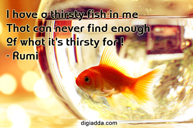 Thirsty Fish Quote by Rumi