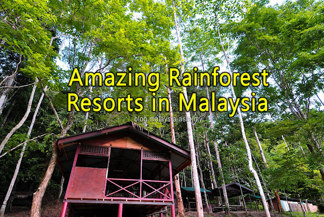 Amazing Rainforest Resorts in Malaysia
