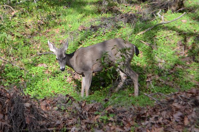 deer by the side