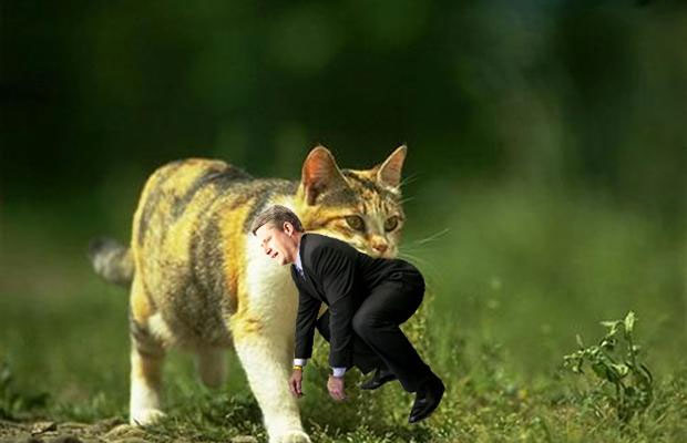 Stephen Harper Kitten Picture