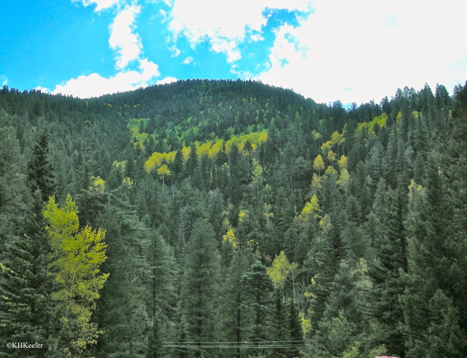 aspen in fall in the Rockies