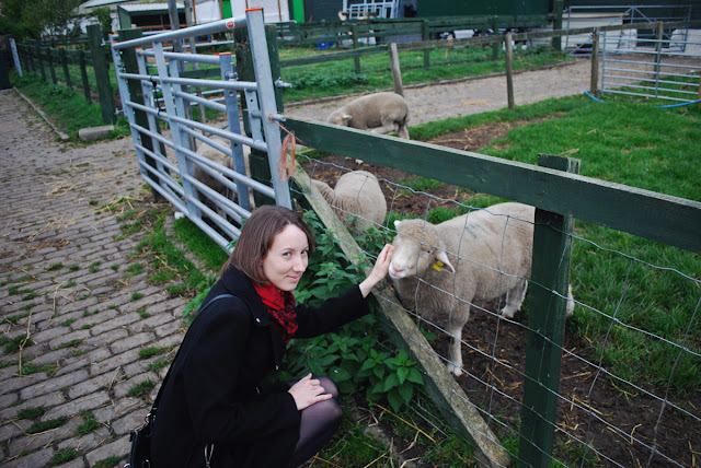 Stroking the sheep - Gorgie City Farm