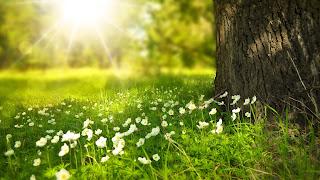 Witte bloemen onder boom