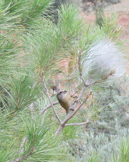 Piquituerto material nido