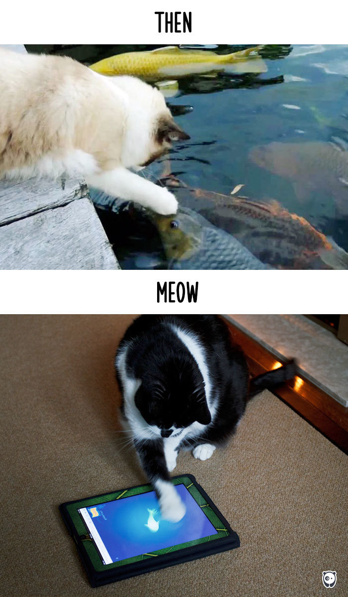 Then vs Meow How Technology Has Changed Cats' Lives (10+ Pics) - Fishing