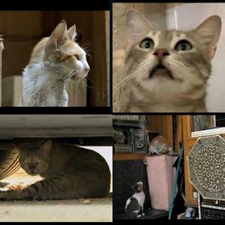 pisici maidaneze in Cairo