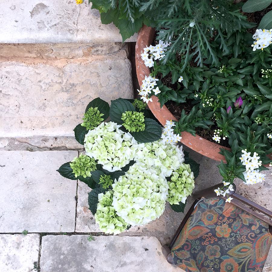 Di piante, fiori e nonne giardiniere