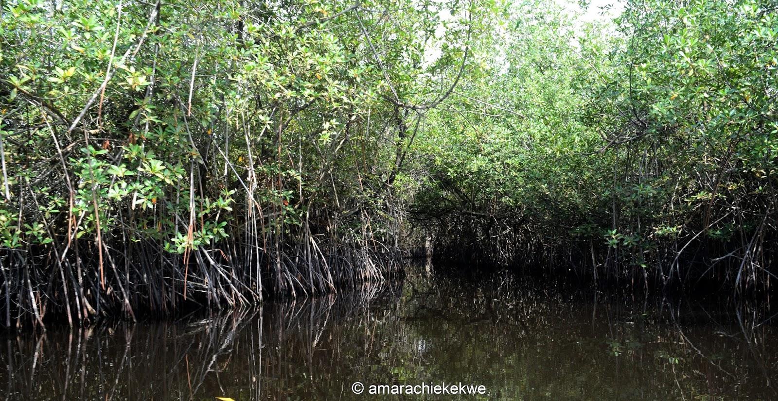 https://i1.wp.com/2.bp.blogspot.com/-Tw8SI6lkz8c/WDQkDr85p9I/AAAAAAAAWqg/q5o7AvkKxXgWU79i1KU5E3lpERHEUa2rQCLcB/s1600/mangrove.jpg?resize=770%2C398&ssl=1