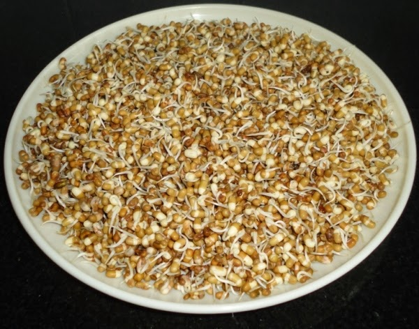 sprouted matki to make  Matki usal recipe