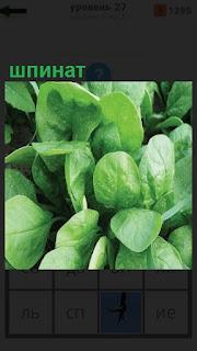 1100 слов растет зеленый шпинат на 27 уровне