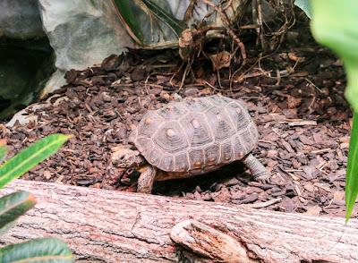 Schildkröte im Luisenpark Mannheim