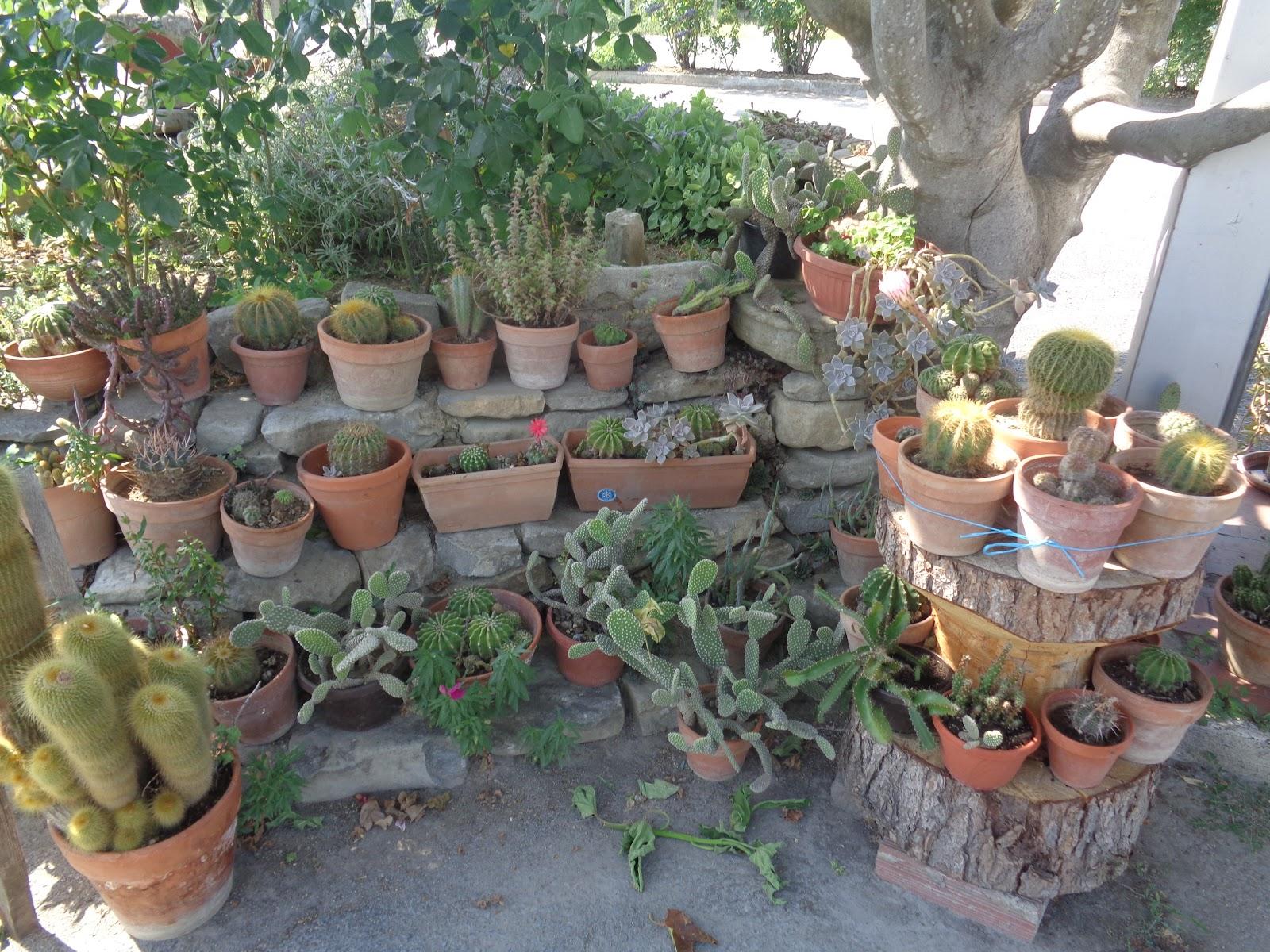 Giardino roccioso con piante grasse for Giardino roccioso con piante grasse