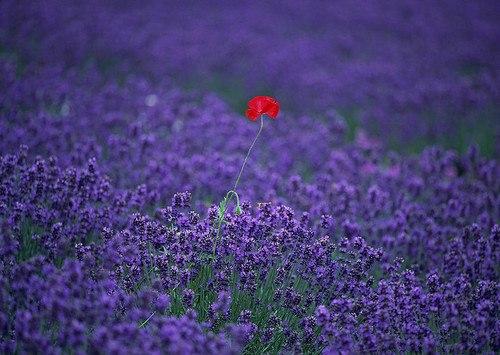 Ilclanmariapia sfumature di viola lilla glicine e ciclamino for Tende lilla glicine