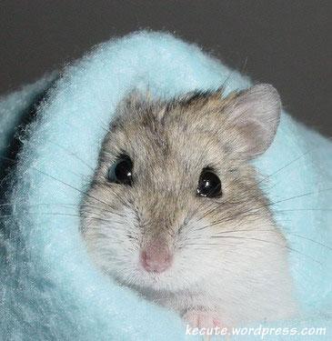 Confessions of a Hamsterholic: Illnesses