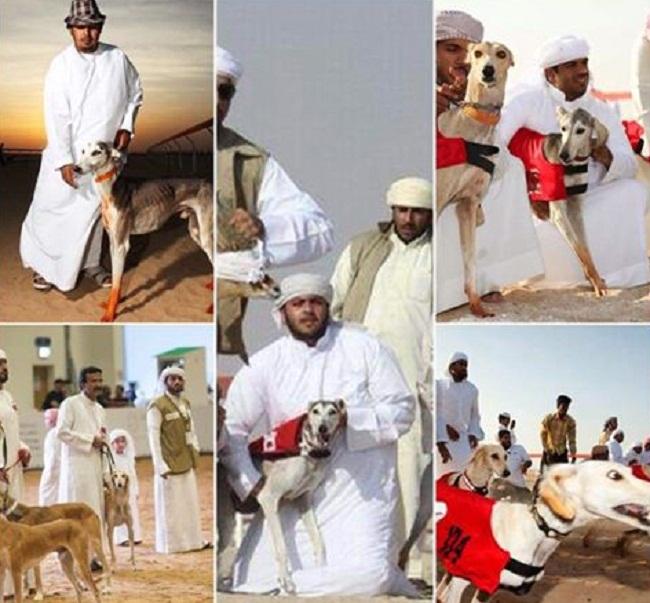Photo anjing balapan punya orang Arab jadi viral di dunia maya