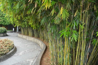 Philippine Culture And Surprises Landscaping And Garden