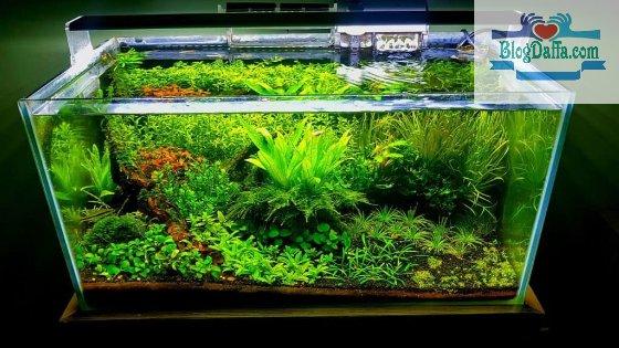 Letakkan tanaman aquascape