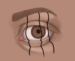 Contour Line Drawing Eye : Jeff searle: drawing the eye