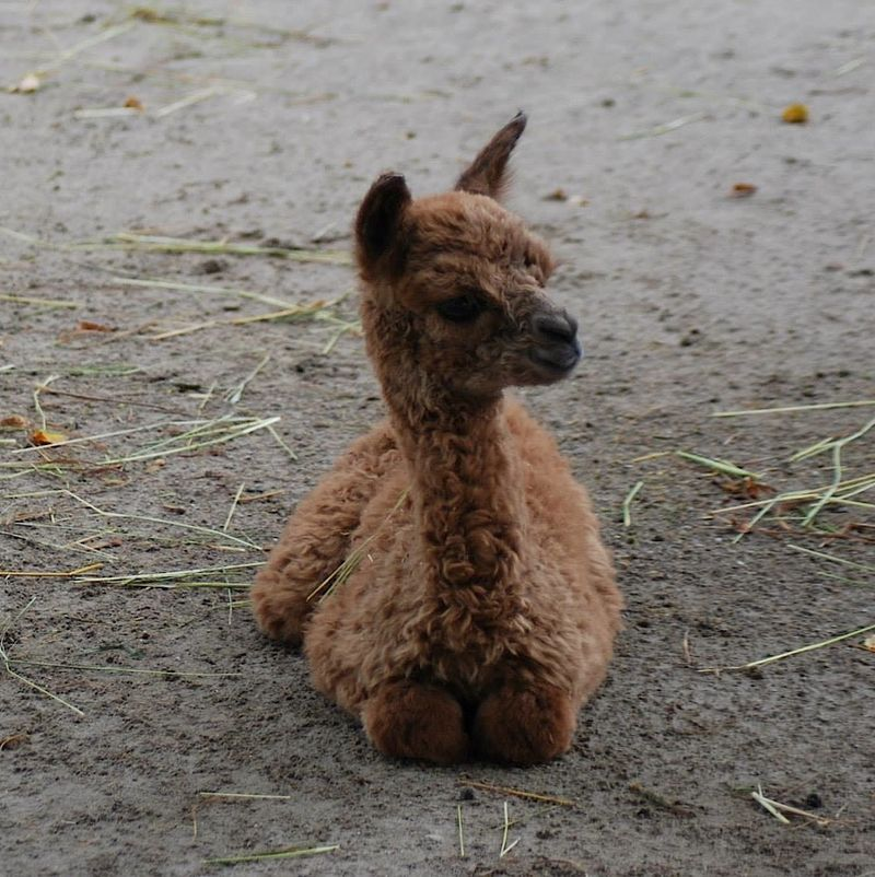 Baby Animals: Cria 11