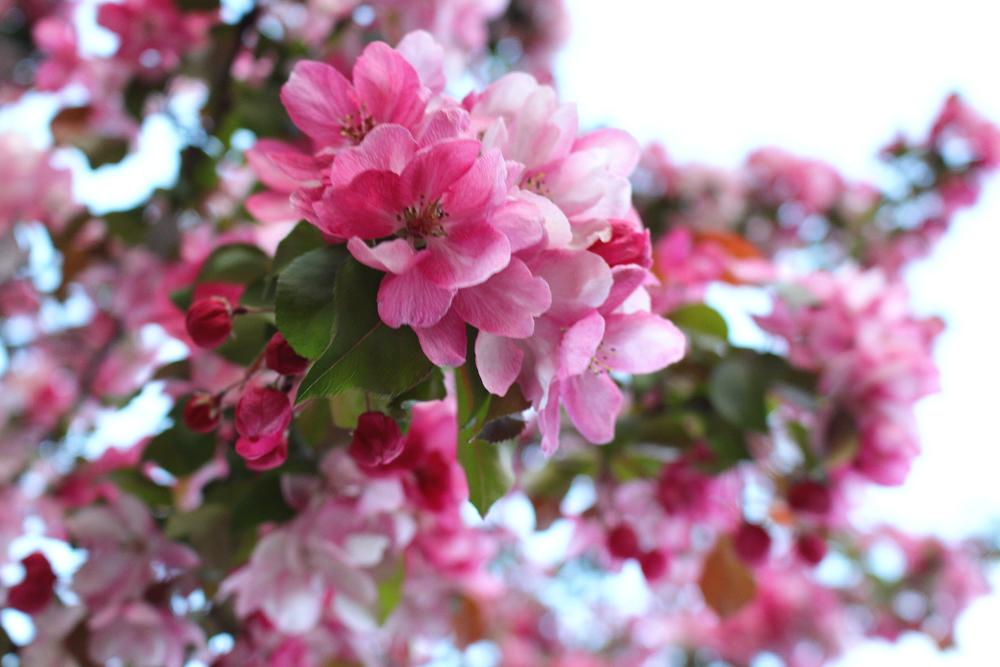 London blossom - UK lifestyle blogger