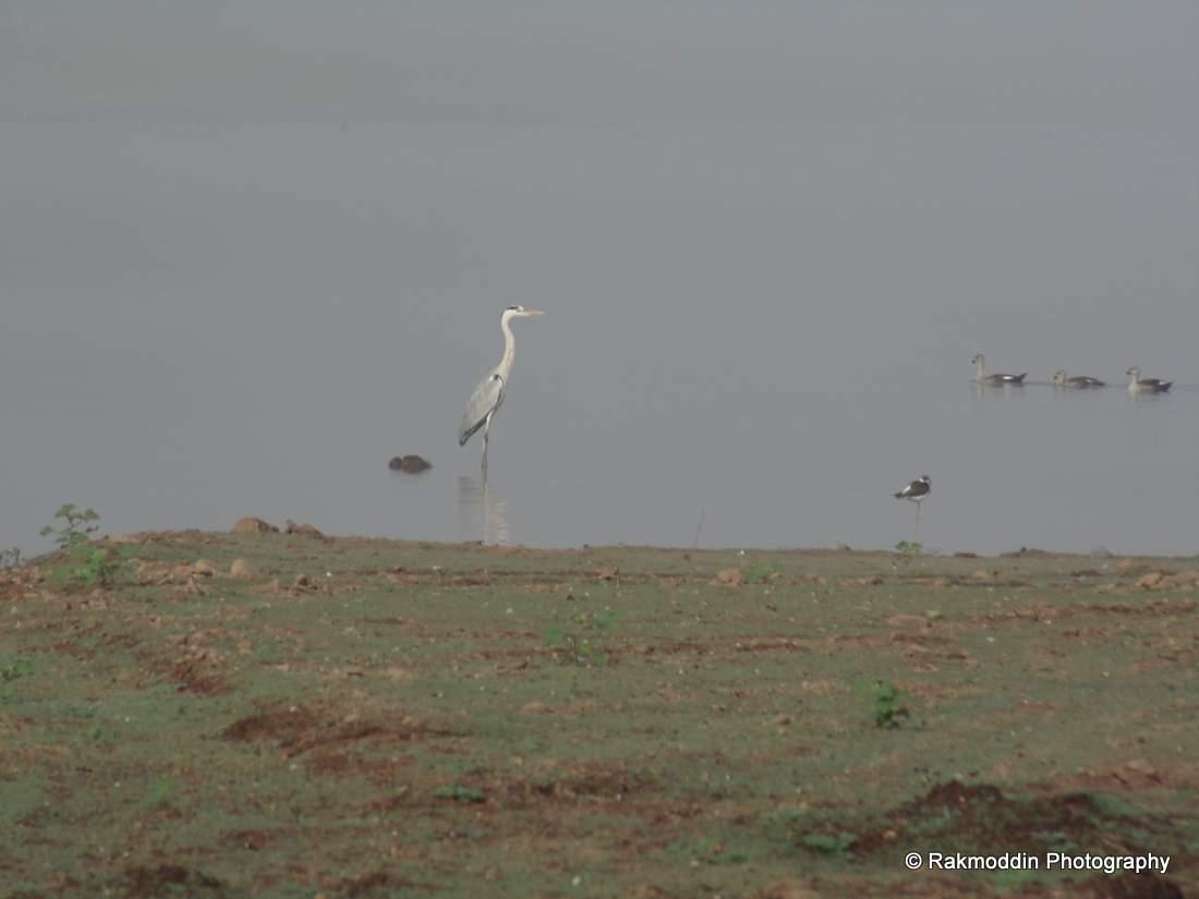 Bird watching at Veer Dam near Pune