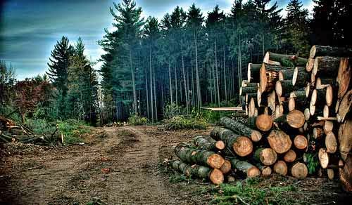 study notes study guides essay deforestation and its harmful effect