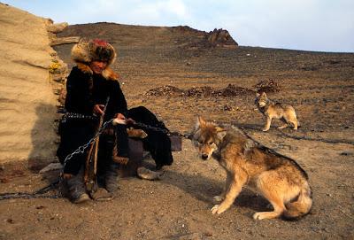 mongolia-tame-wolf-kazak.bmp