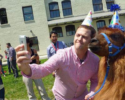 Lustige Geburtstagsbilder mit Tieren - Mann macht mit Lama Selfie