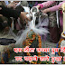 एक लोटा कच्चा दूध शिवलिंग पर चढ़ाये सारे दुःख दूर हो जायेंगे || Chandra Dosh Nivaran