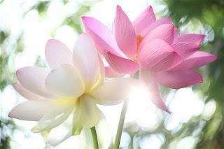 Nhất thiết pháp giai thị Phật pháp - Chẳng pháp nào không phải là Phật pháp